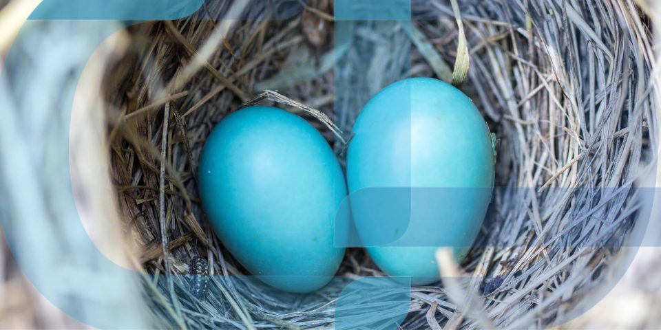 Two blue eggs in a nest CDP's connective accounting ensuring you have the right eggs in the right basket